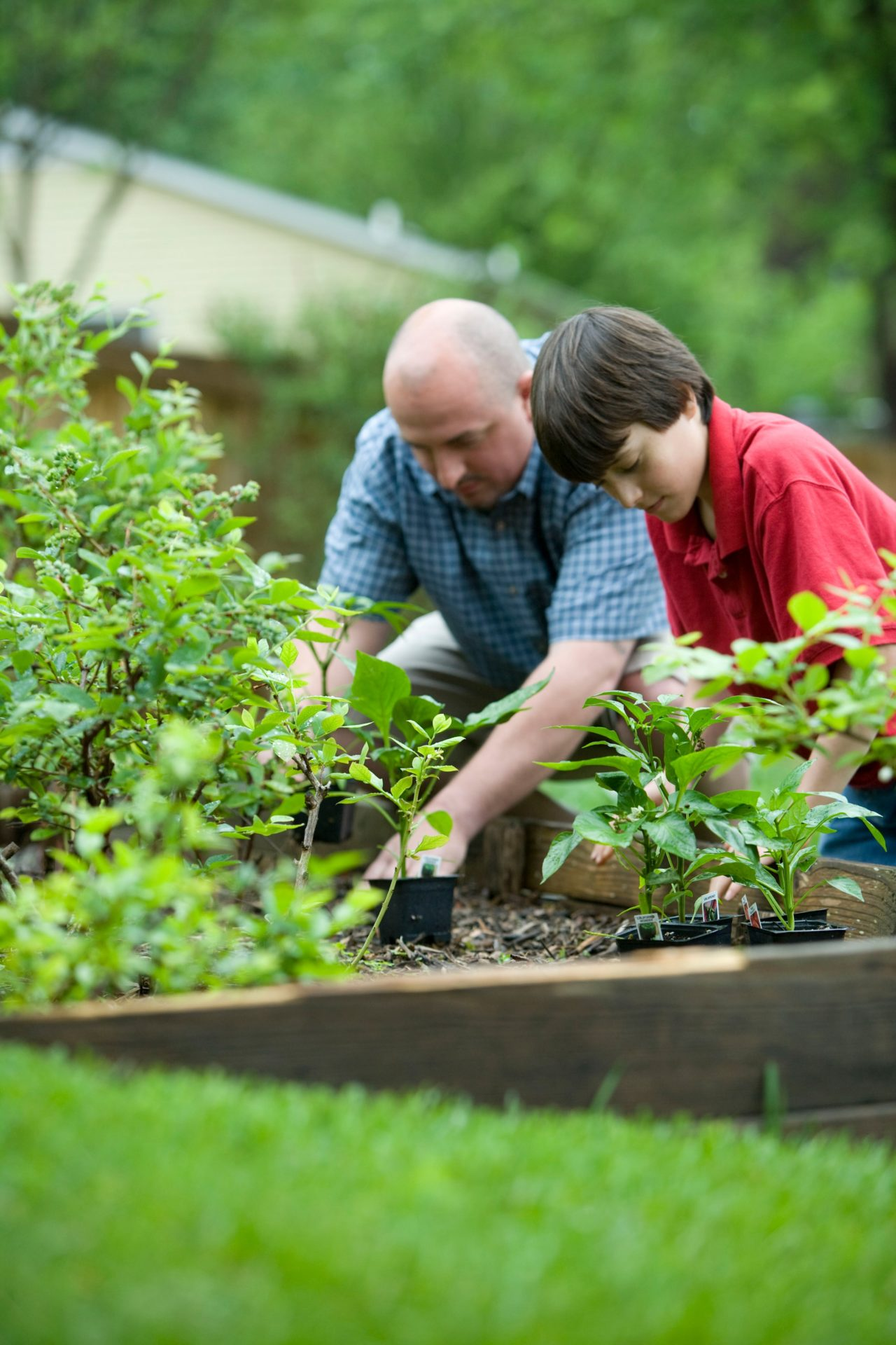 It's time to start your vegetable garden - Olmsted's Nursery